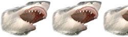 Shark Rating - 2.5/5