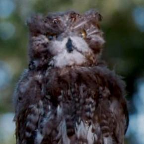 Owl murder!