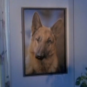 The Terror of the Alsatian Portrait