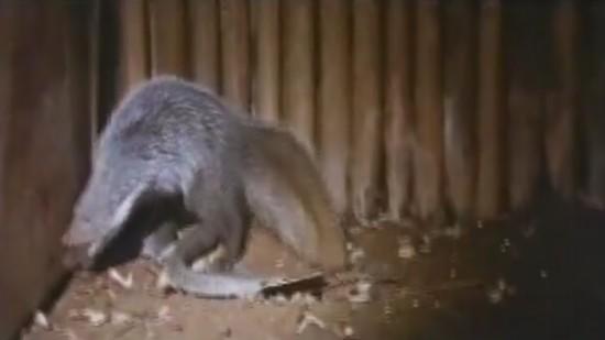 Mongoose_000000