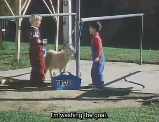 Goat Zambo_000000