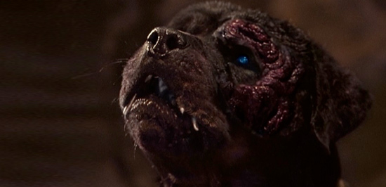 The robo-rottweiler of Rottweiler (2004)