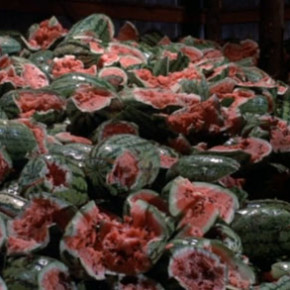 Watermelon massacre